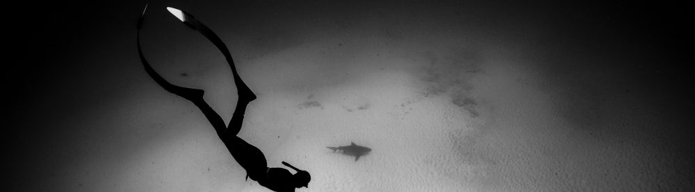 Freedive Bullshark