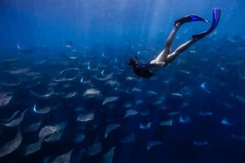 Freediving with mobula rays