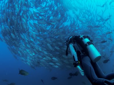Scuba Diving Sailing Charter