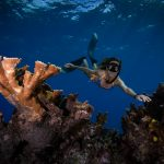 Freediving coral reef Mexico