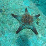 Sea Star Espiritu Santo