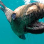 Espiritu santo sea lions tour
