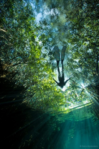 Cenote expedition freediving with Freefall Academy