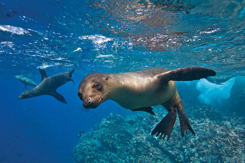 Espiritu santo sea lions