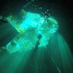 Freediving courses in Tulum cenotes
