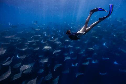 Freediving with mobula rays