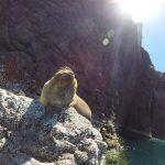 Espiritu santo sea lions freediving