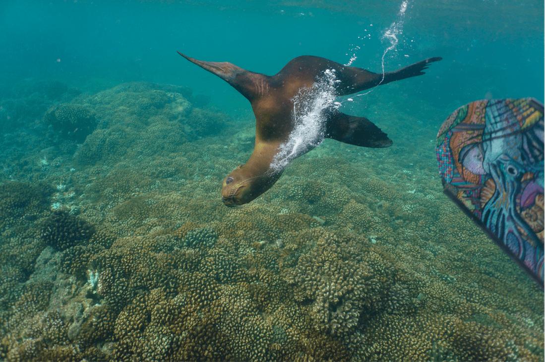 Sea Lion La Paz