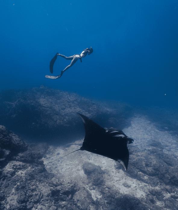 Freedive with Mantas