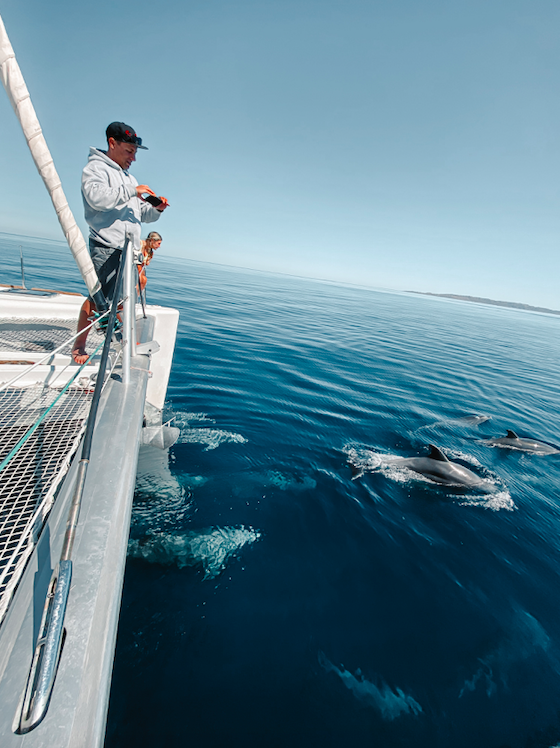 Sailing Dolphins